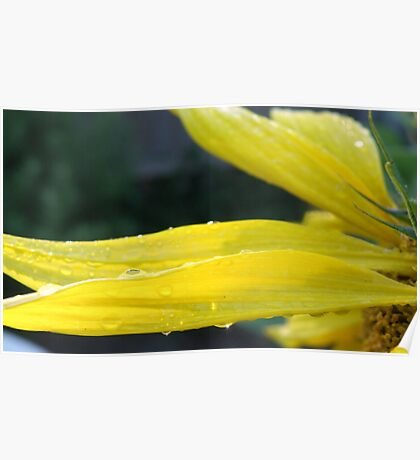 Sunsparkle Dew Drops! Poster