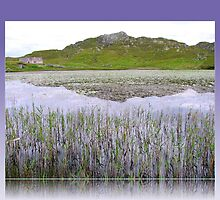 Reeds and Water Lilies - Hebridean Lake by BlueMoonRose