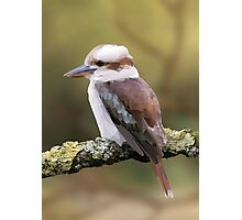 Low-Poly: Kookaburra by DanshawGraphic Photographic Print