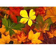 Colorful Autumn Photographic Print