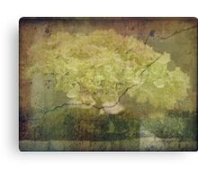 Vintage Hydrangea Canvas Print