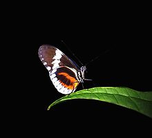Resting Butterfly by mark4321