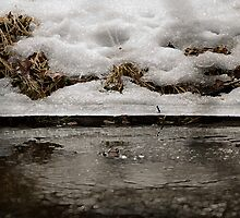 Spring Is Coming - melting snow by Jarede Schmetterer
