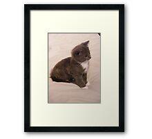 Oliver the kitten 001 Framed Print