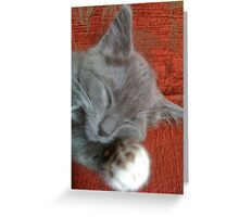 Oliver the kitten - Cat Nap Greeting Card