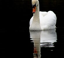 Dunham Swans by Debbie Ashe