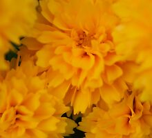 bright, sunny, yellow, soft light garden flowers. by naturematters