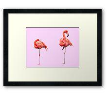Flamingos     Pink Framed Print