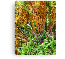 Lorikeets in Paradise Canvas Print