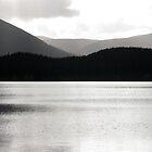 Loch Morlich Silhouetted Skyline by Tazfiend