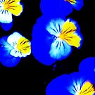 Blue Pansies Abstract by schiabor