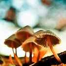 Shrooms in Sherwood Forest by Rory Garforth