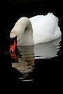 Mute Swan V by Debbie Ashe