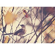 Little Bird on a Tree Branch Photographic Print