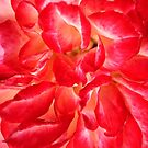 Petals Of Rose by Joy Watson