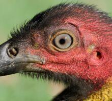 Wild Turkey 01 Sticker