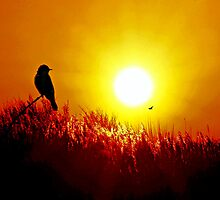 Early Bird by sandmartin