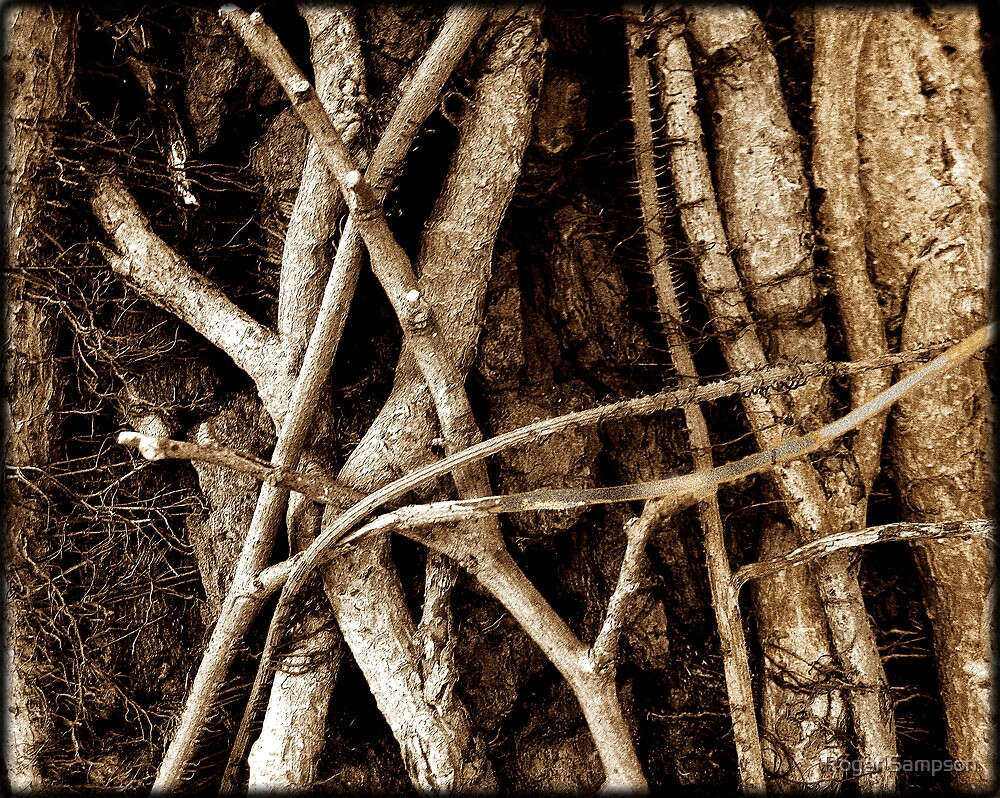 Vine and Tree... a True Affair by Roger Sampson
