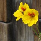 flower on wood by elsie