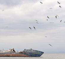 Sea birds and the dead ship by xura