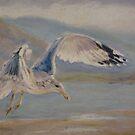 Seagull Landing by Terri Maddock
