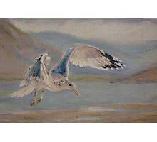Seagull Landing Photographic Print