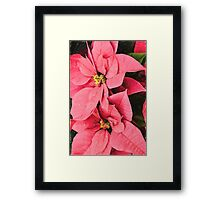 Pink Poinsettias Painting - Christmas Impressions Framed Print