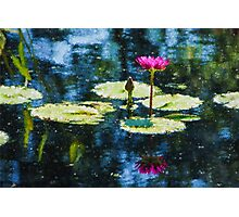 Waterlily Impressions - Dreaming of Monet Gardens Photographic Print