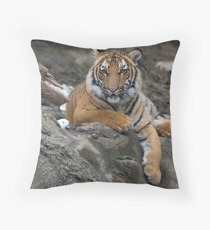 Cubs Stand Throw Pillow
