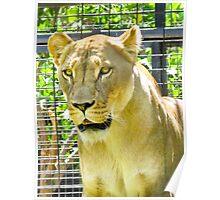Lion Alert Poster