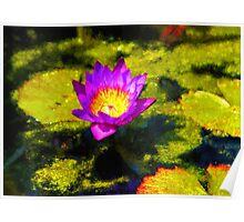 Vivacious Waterlily Impression Poster