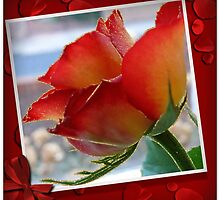 A Rose for Mothering Sunday by Morag Bates