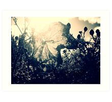 {late}autumn Art Print