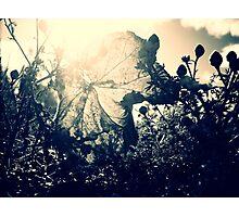 {late}autumn Photographic Print