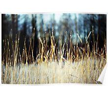 grass|glade Poster