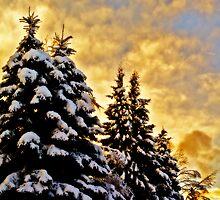{heavy}snow by northwardphoto