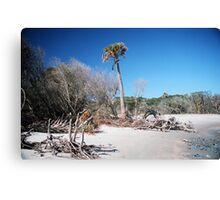 Lone Palmetto, Folly Beach Canvas Print