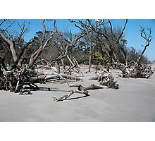 Beach Bones Photographic Print