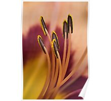 Stamens Poster