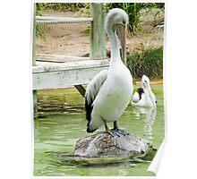 Percival Pelican? Poster