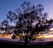 Enjoying the Sunset by Vince Gaeta