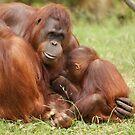Orangutan family by Lindie Allen