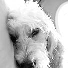 Dog Zonked by martinilogic