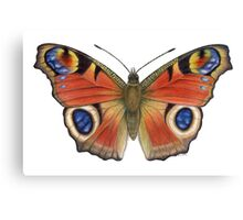 Peacock Butterfly (Inachis io) Canvas Print
