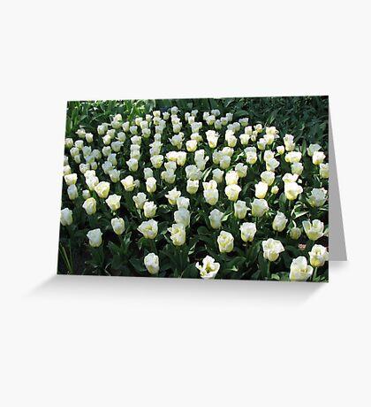 Delicate Beauties - Tulips in the Keukenhof Gardens Greeting Card