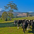 Expensive farmland at Mt Worth, Victoria by johnrf