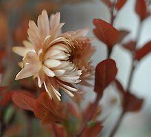 Una flor.............. by cieloverde