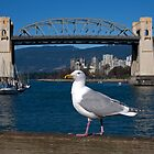 City Gull by smartart