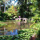 Tamborine Botanical Gardens Stone Bridge  by Virginia McGowan