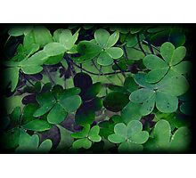 Grunge Clover Photographic Print